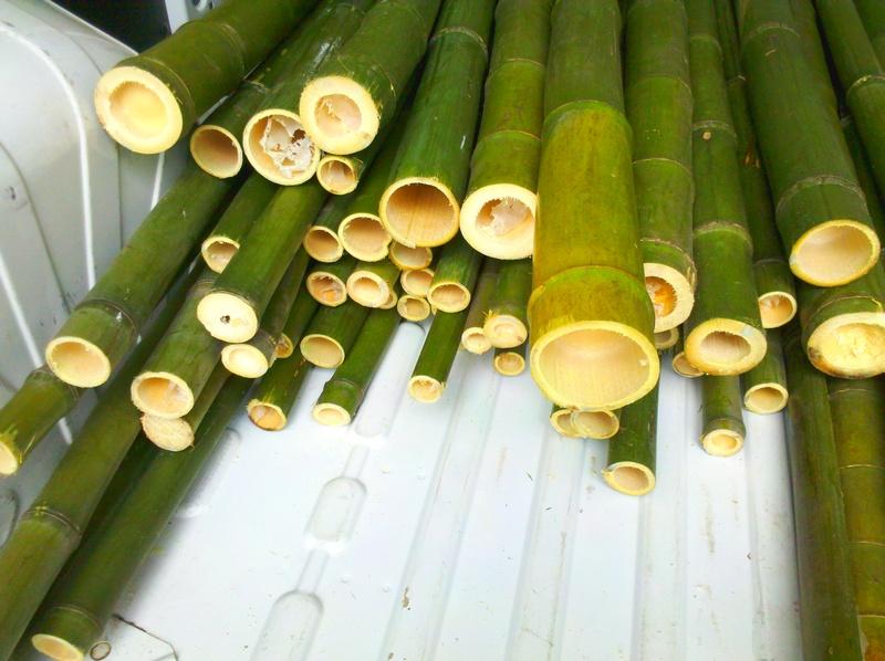 Vendita Bambu Milano.In Vendita Canne Di Bambu Bambu Con Diametri Da 1 A 10 Cm