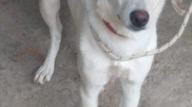 regalo cucciola di cane meticcio 1 anno e mezzo