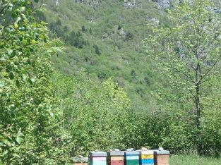 nuclei d'api